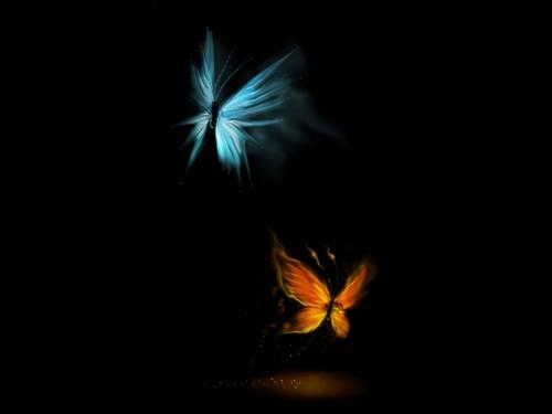 papillons,2.jpg