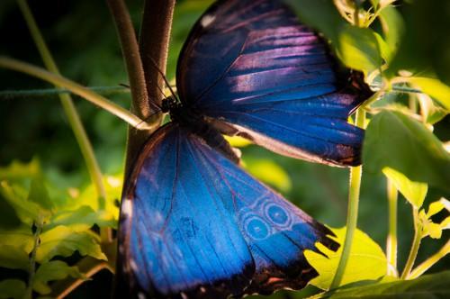 papillons14.jpg