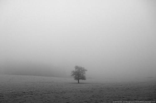 normal_un-arbre-seul-dans-la-brume.jpg