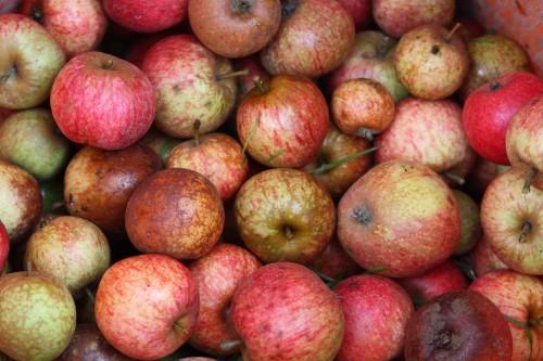 Pommes_à_cidre.jpg
